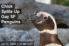 Chick Splits Up Gay SF Penguins