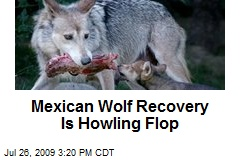 Mexican Wolf Recovery Is Howling Flop