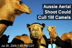 Aussie Aerial Shoot Could Cull 1M Camels