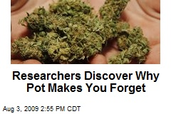 Researchers Discover Why Pot Makes You Forget
