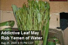 Addictive Leaf May Rob Yemen of Water