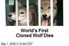 World's First Cloned Wolf Dies