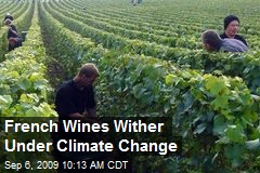French Wines Wither Under Climate Change