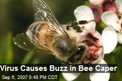 Virus Causes Buzz in Bee Caper