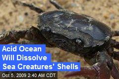 Acid Ocean Will Dissolve Sea Creatures' Shells