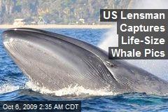 US Lensman Captures Life-Size Whale Pics