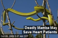 Deadly Mamba May Save Heart Patients