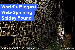 World's Biggest Web-Spinning Spidey Found