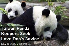 Taiwan Panda Keepers Seek Love Doc's Advice