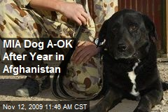 MIA Dog A-OK After Year in Afghanistan