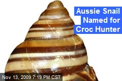 Aussie Snail Named for Croc Hunter