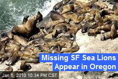 Missing SF Sea Lions Appear in Oregon