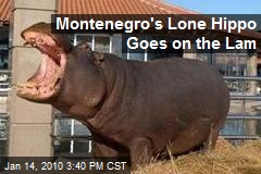 Montenegro's Lone Hippo Goes on the Lam