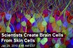 Scientists Create Brain Cells From Skin Cells