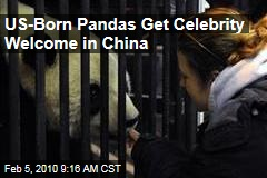 US-Born Pandas Get Celebrity Welcome in China