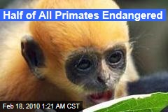 Half of All Primates Endangered