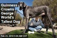 Guinness Crowns George World's Tallest Dog