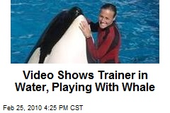 Video Shows Trainer in Water, Playing With Whale