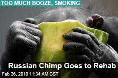 Russian Chimp Goes to Rehab