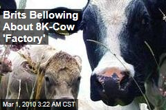 Brits Bellowing About 8K-Cow 'Factory'