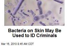 Bacteria on Skin May Be Used to ID Criminals