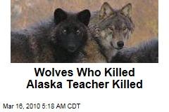 Wolves Who Killed Alaska Teacher Killed