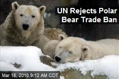 UN Rejects Polar Bear Trade Ban