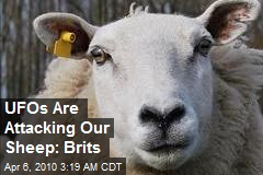 UFOs Are Attacking Our Sheep: Brits