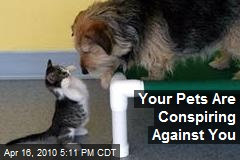 Your Pets Are Conspiring Against You