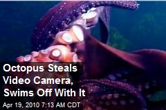 Octopus Steals Video Camera, Swims Off With It