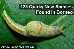 123 Quirky New Species Found in Borneo