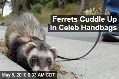 Ferrets Cuddle Up in Celeb Handbags