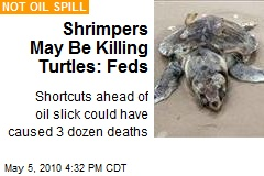 Feds: Rushed Shrimpers May Be Killing Turtles