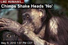 Chimps Shake Heads 'No'