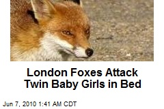 London Foxes Attack Baby Girls in Cribs