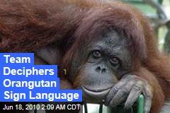 Team Deciphers Orangutan Sign Language