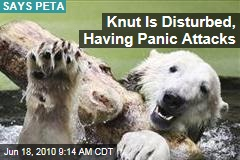 Knut Is Disturbed, Having Panic Attacks