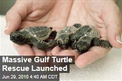 Massive Gulf Turtle Rescue Launched