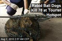 Rabid Bali Dogs Kill 78 at Tourist Hotspot