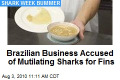 Brazilian Business Accused of Mutilating Sharks for Fins