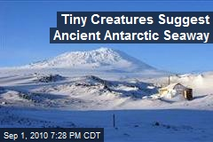 Tiny Creatures Suggest Ancient Antarctic Seaway