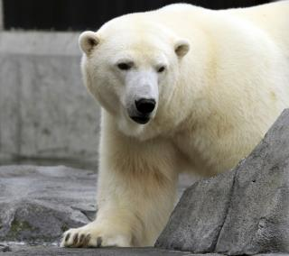 Zoo Locked Down After Polar Bear Escapes