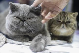 Study Offers Good News for Cat Owners
