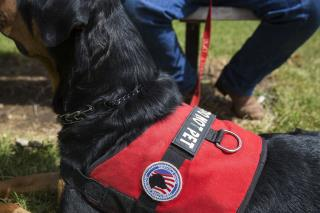 States Are Cracking Down on Fake Service Dogs