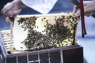 Landmark Berlin Cathedral Also Home to 30,000 Honeybees