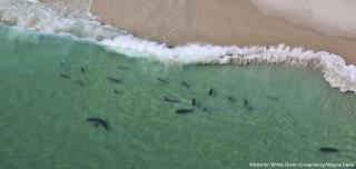 Shark Sightings, Encounters off Cape Cod Up in 2018