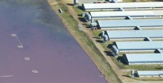 NC's Latest Post-Storm Fiasco: Flooded Pig-Waste Lagoons