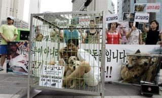 South Korea Closes Biggest Dog Slaughterhouse