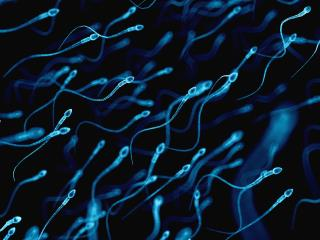 Marijuana Is Bad for Sperm, Right? Maybe Not