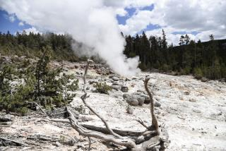 Woman Illegally Enters Shut-Down Yellowstone, Falls Into Thermal Feature